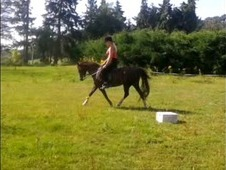 Alice 12. 2hh Liver Chesnut Mare, Registered Welsh Section B