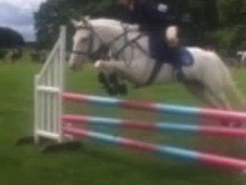Confidence-giving Pony Club BSJA reg Mare