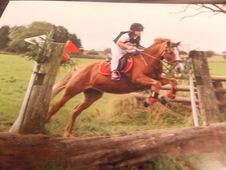 12 hh pony mare all rounder