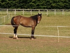 Reg Welsh D Filly 2yr Old