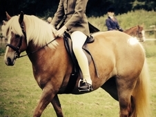14 hh Fun Family Allrounder