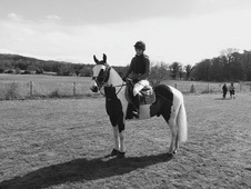 Lovely Gelding For Sale