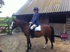Kind, Genuine Welsh Sec A Pony 12hh