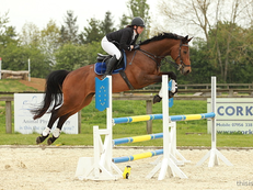 SUPER TALENTED 16.1h 7yrs mare by Canturano