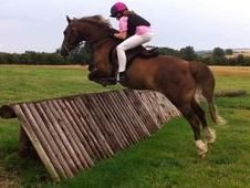 Stunning Wh/pc/hunting Pony