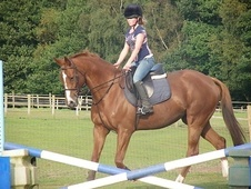 Ex Racehorses horse - 10 yrs 17.0 hh Chestnut - West Midlands