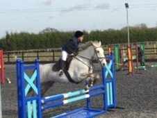 Talented Irish X, 7 year old 15. 3 grey mare