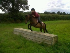 Lead Rein & First Ridden horse - 16 yrs 11 mths 13.0 hh Bay - Wil...