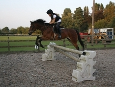 Great Little Jumping Pony