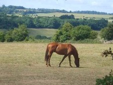 Wanted - Equestrian facility / yard to let near Kidderminster