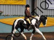***stunning 13. 2hh Hunter Pony***