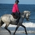 *Quality dressage/ leisure horse* who is safe sane and sensible