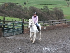 Wanted - Horse on full loan - West Yorkshire