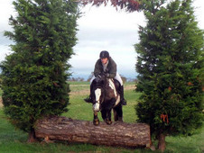 15. 1hh 9 year old coloured mare