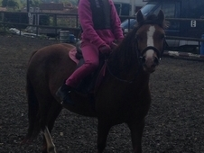 For Sale Lead Rein First Ride Pony Gelding Welsh Section A
