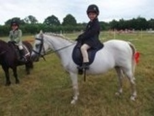 11. 1hh Lead Rein And First Ridden Welsh Mountain Sect. A, Perfec...