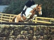All Rounder horse - 6 yrs 16. 1 hh - Laois