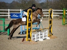 All Rounder horse - 7 yrs 13.2 hh Chestnut - Shropshire