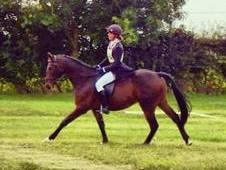 Flashy Thoroughbred For Sale