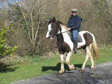 Quality 3 year old Irish sport horse mare for sale