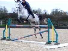 Show Jumpers horse - 8 yrs 2 mths 16.3 hh Dapple Grey - Northampt...