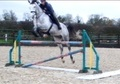 Show Jumpers horse - 8 yrs 2 mths 16.3 hh Dapple Grey - Northamptonshire