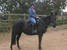 15. 1hh Super Sweet 8yr Black Mare