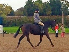 Ror Showing Horse