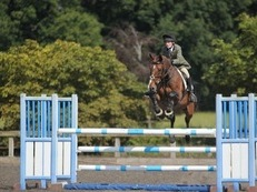 Quality Showjumper/ Allrounder