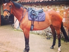 Bombproof Hacking Horse