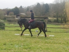 All Rounder horse - 7 yrs 14.2 hh Bay - Surrey