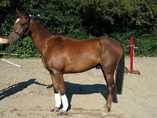 Gorgeous Pony With Potential To Burn
