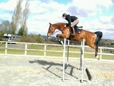 exceptional quality showjumping mare