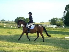 Super dressage/show BSJA pony or great all rounder