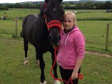 14. 2hh Pony For Sale