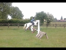 stunning gelding for sale