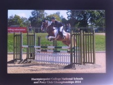 14 HH plaited worker/ competition pony