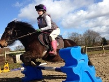 FOR SALE LOVELY SWEET 11. 1 EXMOOR PONY