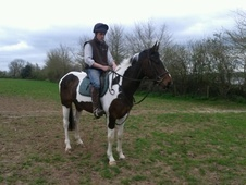 Coloured horse - 4 yrs 15.3 hh Coloured - Gloucestershire