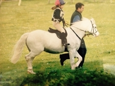 Wonderful children's pony, lead rein or 2nd ridden