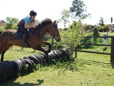All Rounder horse - 4 yrs 5 mths 15.3 hh Bay - Norfolk
