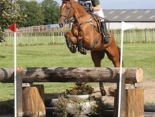 Stunning genuine eventer Fernhill Aldo