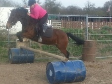 All Rounder horse - 4 yrs 11 mths 14.2 hh Bay - Hertfordshire