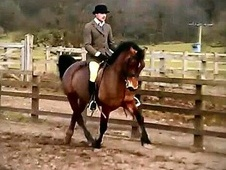 All Rounder horse - 4 yrs 14.0 hh Bay - Lancashire