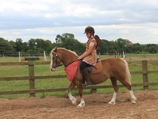 13. 1 mare 6 year old