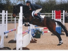 Show Jumpers horse - 12 yrs 16.1 hh Bay - Worcestershire