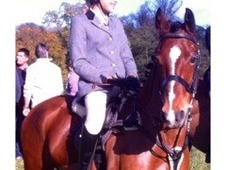 Hublot (socks) 13'2hh, 10YRS old bay gelding