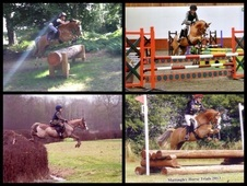 Wonderful, talented and versatile 13.2hh pony