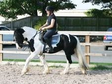 All Rounder Horse - 8 Yrs 14. 1 Hh Piebald - West Yorkshire