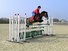 Superb 13. 2hh Showjumper